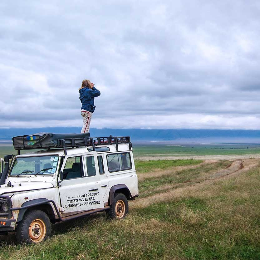 Better vista for scanning for lions from the vehicle roof. Lions on the Crater floor are not tagged in any way (i.e. no radio collars) and we rely on finding them by sight. Often we are helped by tourists in the area – seeing a cluster of vehicles indicates either a rhino or a group of lions.