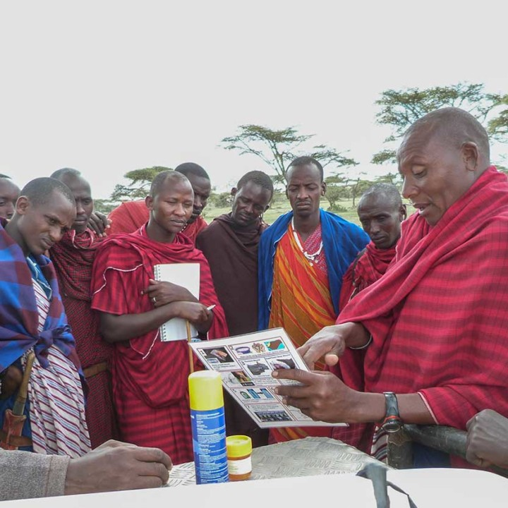 Ilchokuti Koley teaching wound treatment of injured livestock.