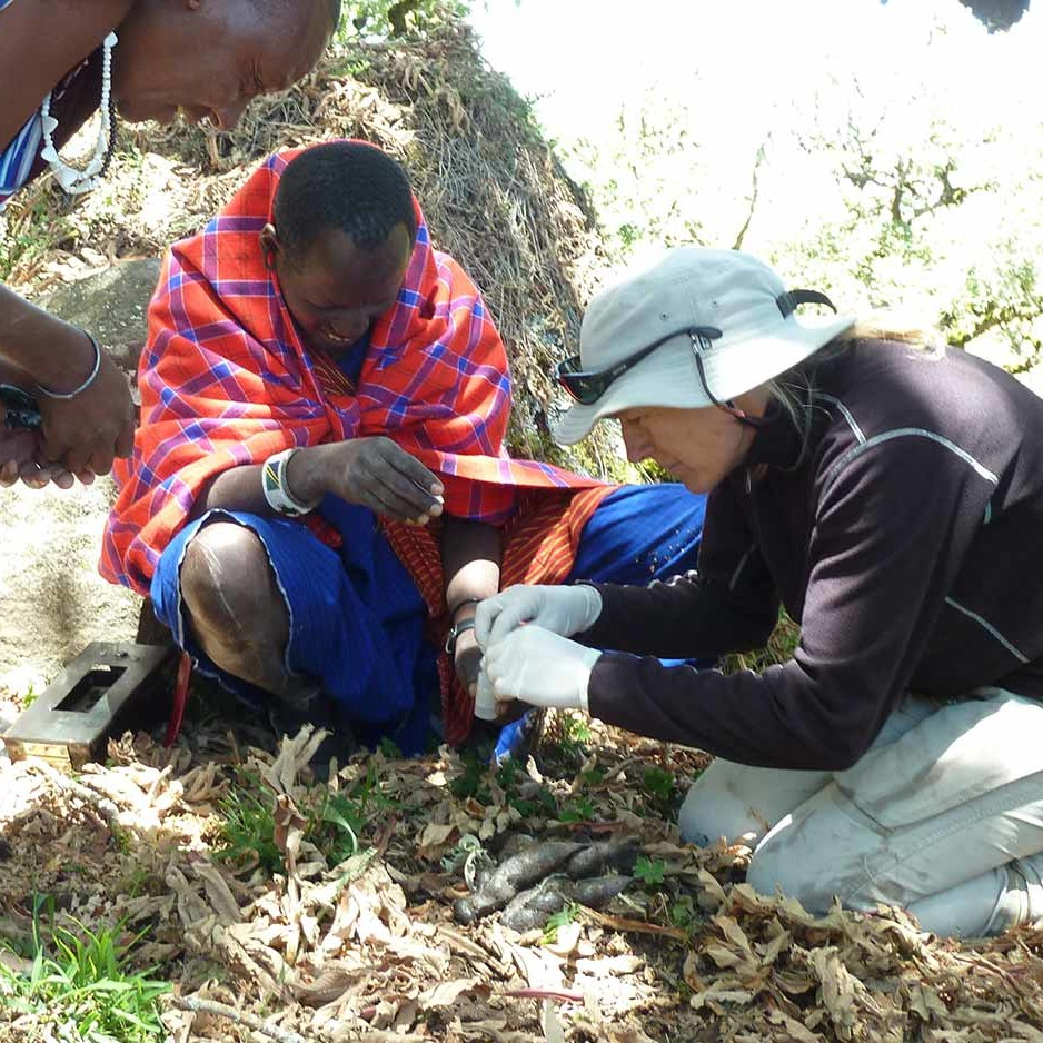 Koley, Lazaro, and Ingela have just found lion feces, on top of Lemakarut mountain. Getting a valuable genetic sample from lions we know very little of.