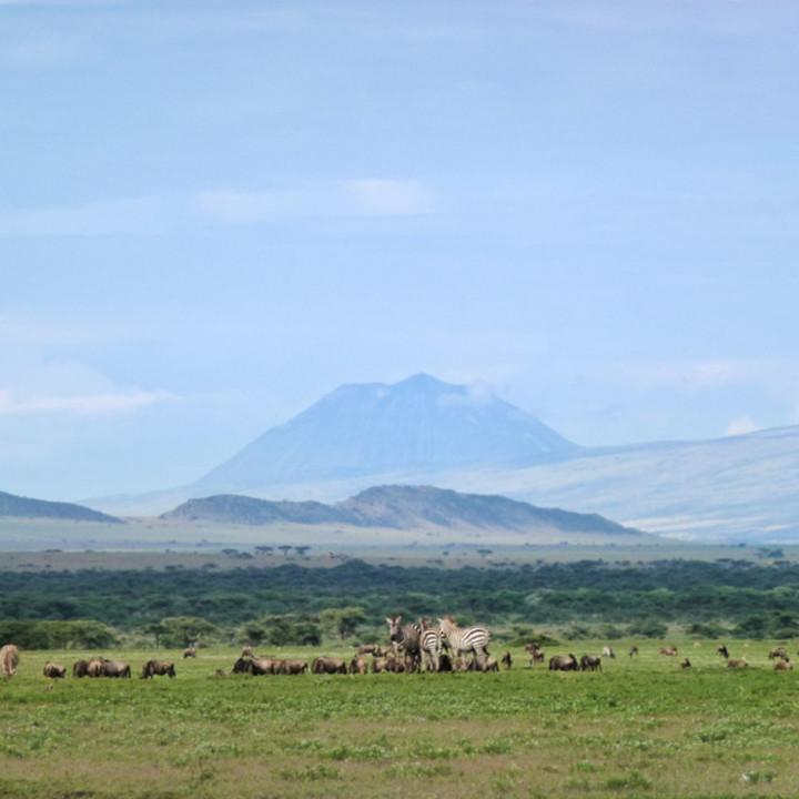 Ngorongoro landscape, Ol'donyo Lengai volcano in the background. The great gnu and zebra migration fills the vast plains.