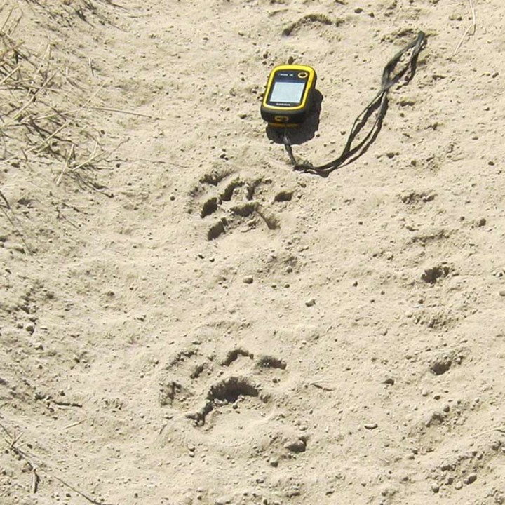 We collect a lot of lion data, for example gps-position of lion tracks.
