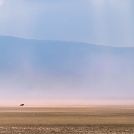 Lonely gnu in the Ngorongoro Crater