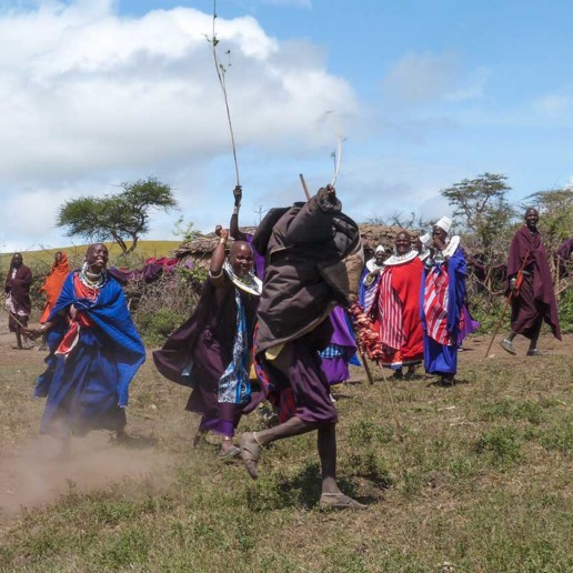 A traditional Maasai feast celebrated by Ilchokuti Roimen's boma (wedding, circumsision, and young elder eating a bull). Here the scramble game between women and a man over a big size shish kebab (meat kebab).